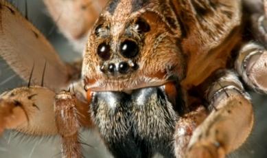 spider234233_465_276_int