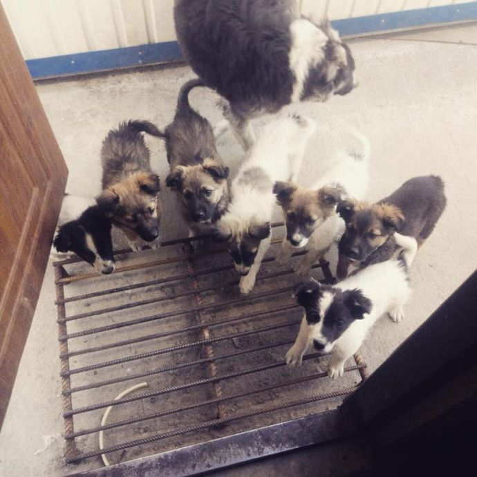 Chernobyl puppies