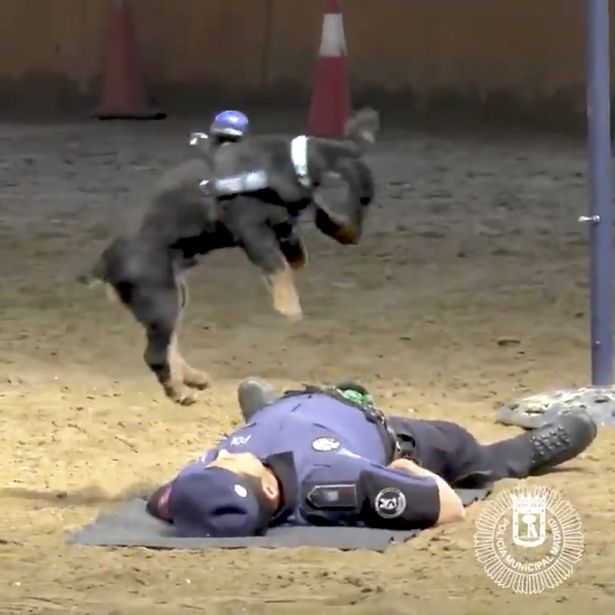 this-police-dog-can-perform-cpr-yes-really
